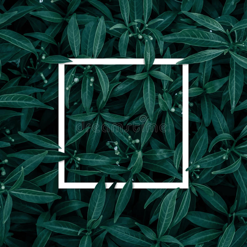 Quadratischer Rahmen, leer für Werbeschild oder Einladung stockfotografie