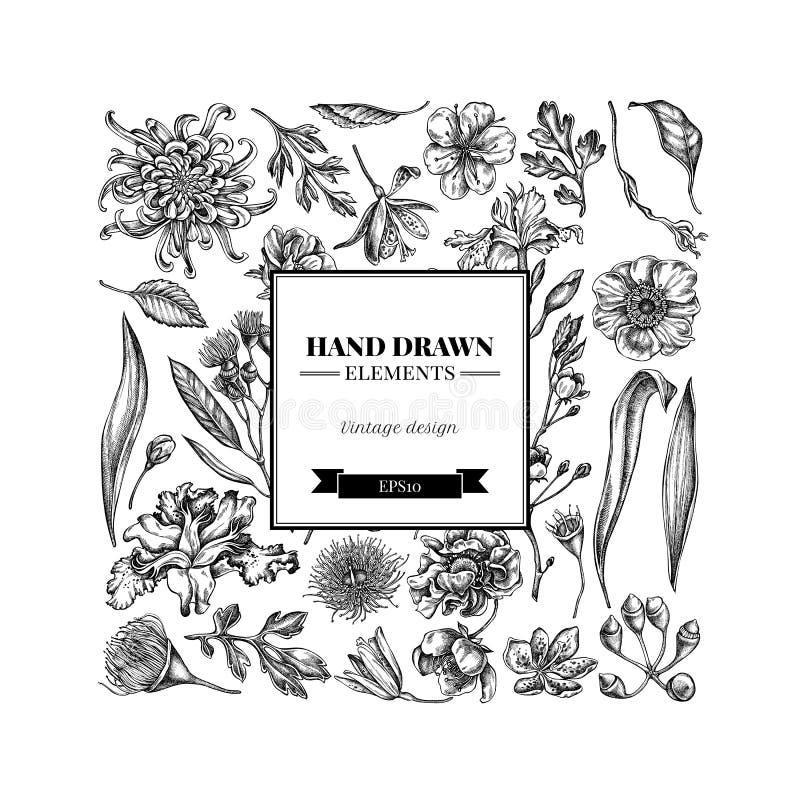 Quadratisches Blumenmuster mit japanischer Schwarzweiss-Chrysantheme, Brombeerlilie, Eukalyptusblume, Anemone, Iris lizenzfreie abbildung