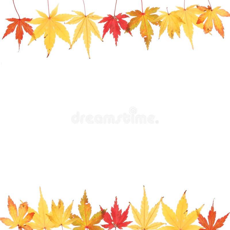 Quadratisches Feld des Herbstes stockbilder