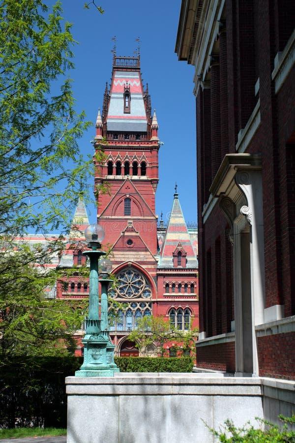 Quadrato di Harvard, Cambridge fotografia stock libera da diritti