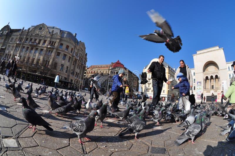 Quadrato di opera di Timisoara, Romania fotografia stock libera da diritti
