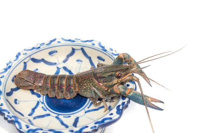 Quadricarinatus azul australiano de Cherax das lagostas na placa foto de stock royalty free