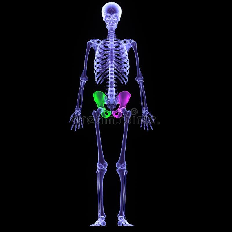 quadris do corpo humano da ilustração 3d ilustração royalty free