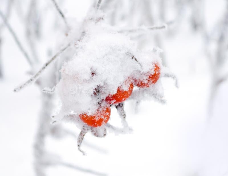 Quadris do inverno imagens de stock