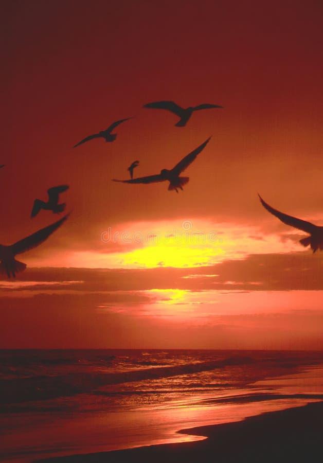 Download Quadro imagem de stock. Imagem de mosca, praia, gull, florida - 125395