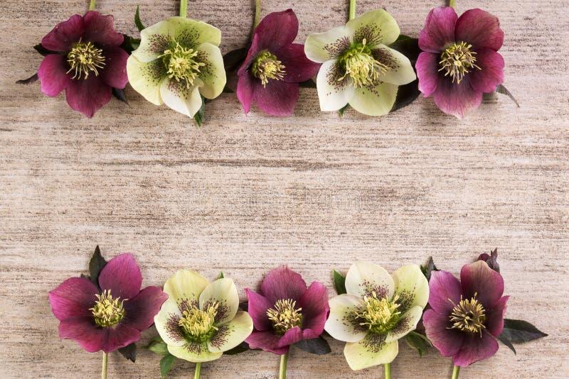 Quadro as flores da mola quaresmais aumentou em seguido na luz - fundo rústico marrom Copie o espaço foto de stock