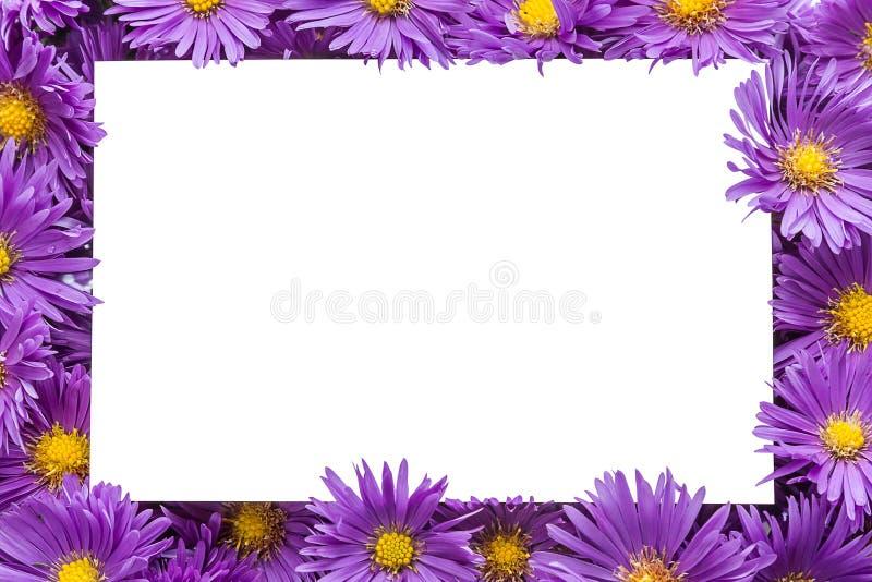 Quadro/beira de flores roxas fotografia de stock royalty free