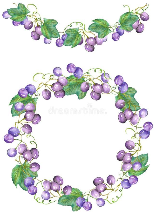 Quadro a beira, a festão e a grinalda dos grupos (vermelho, violetas) das uvas azuis, pintadas em uma aquarela ilustração royalty free