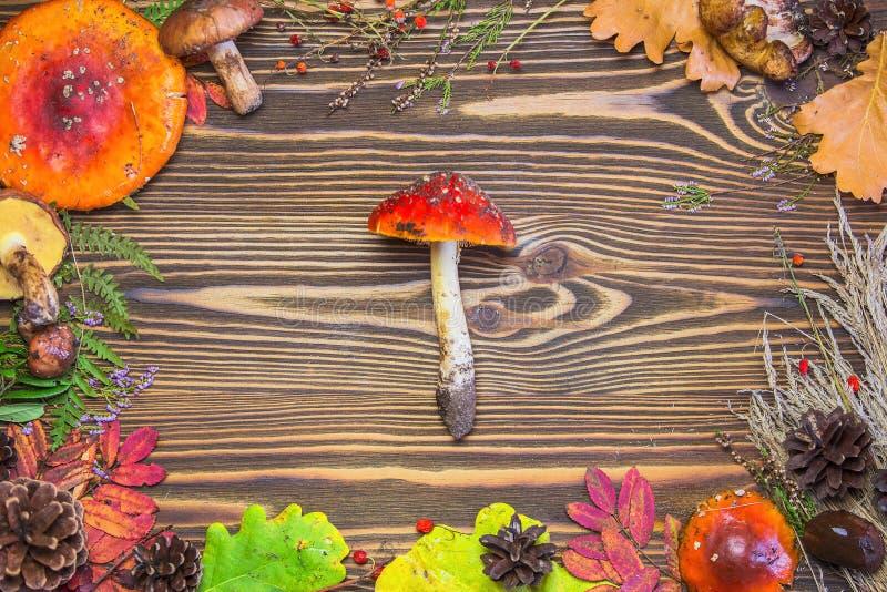 Quadro bonito de materiais naturais, cogumelos, cones, folhas de outono, agarics de mosca, bagas Fundo de madeira marrom do outon fotografia de stock
