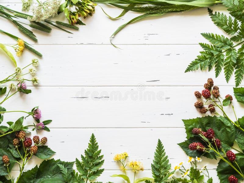 Quadro botânico da amora-preta, camomila, flor do Linden, trevo no fundo de madeira Composição colocada lisa das ervas selvagens  foto de stock
