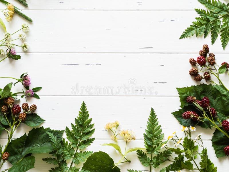 Quadro botânico da amora-preta, camomila, flor do Linden, trevo no fundo de madeira Composição colocada lisa das ervas selvagens  fotografia de stock royalty free
