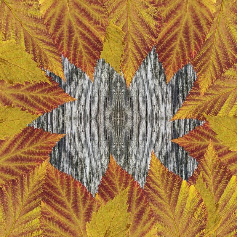 Quadro brilhante das folhas na tabela rústica de madeira cinzenta velha Folhas secas pressionadas tapete da framboesa e do vidoei imagens de stock