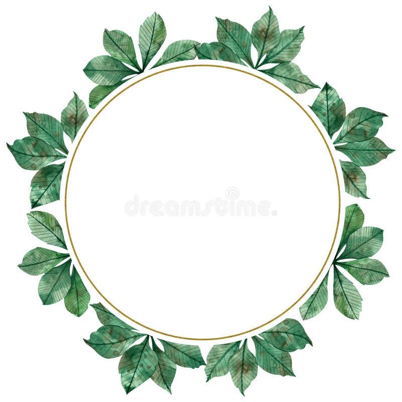 Quadro circular da aquarela da estação do outono: folhas verdes coloridas, ramos de árvore do bordo isolados no fundo branco ilustração stock