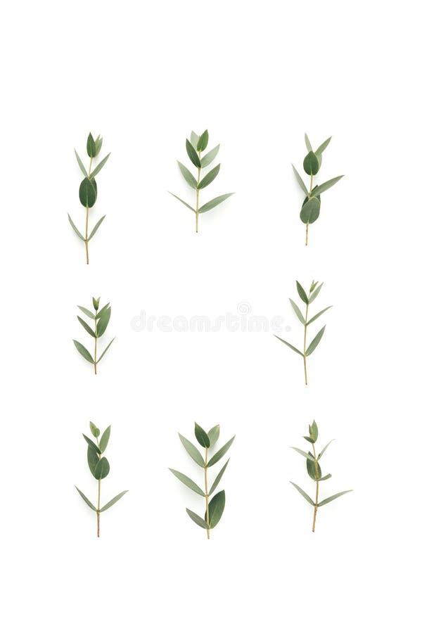 Quadro com as folhas do verde no fundo branco fotos de stock royalty free