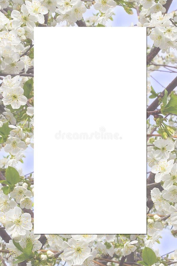 Quadro com flor de cereja foto de stock royalty free