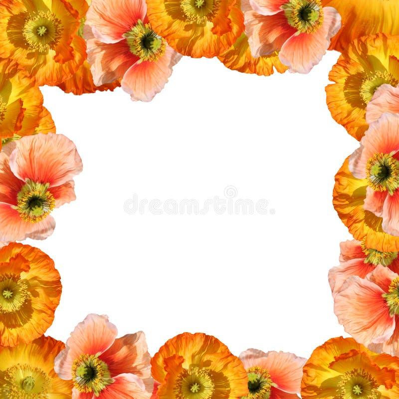 Quadro com flores ilustração do vetor