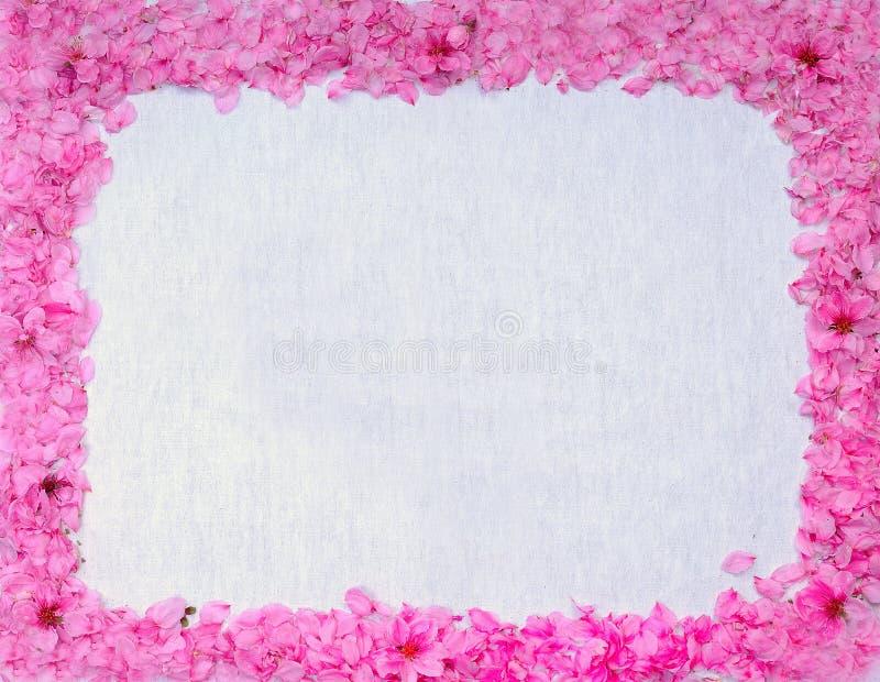 Quadro com flores e flores do pêssego imagens de stock royalty free