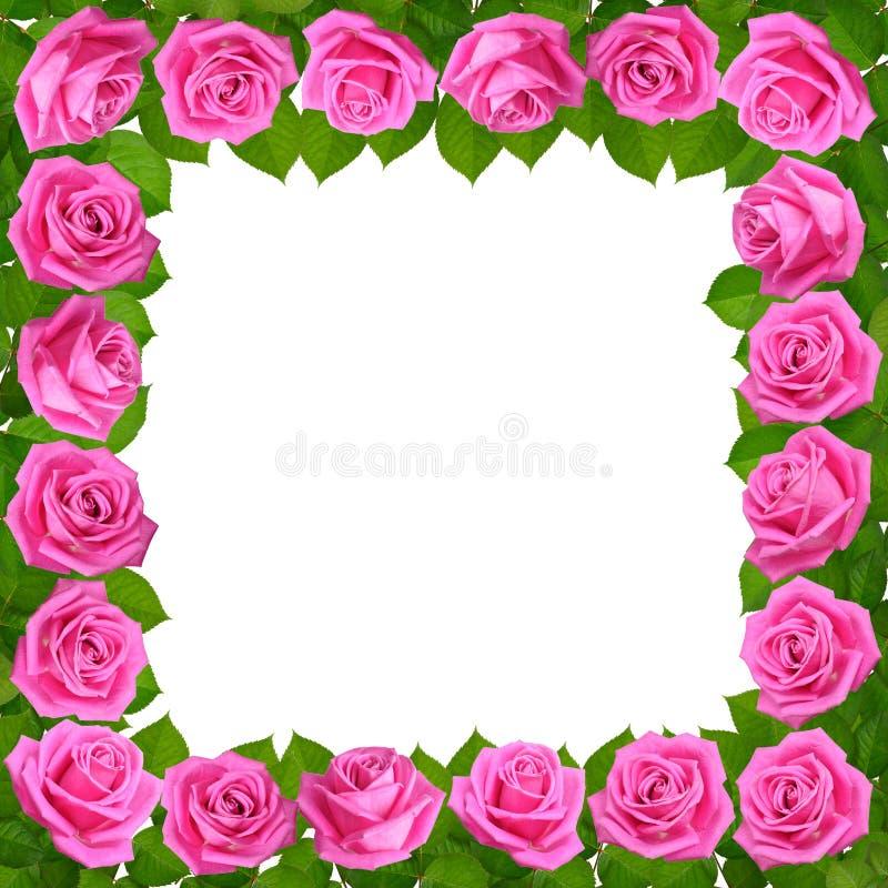 Quadro com rosas cor-de-rosa Isolado no fundo branco fotografia de stock royalty free