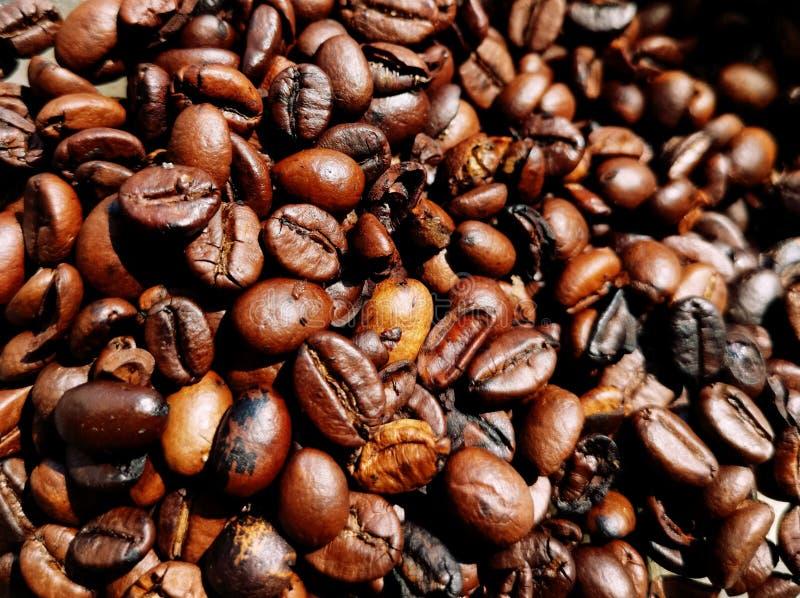 Quadro completo dos feijões do assado do café, fundo, papel de parede imagem de stock