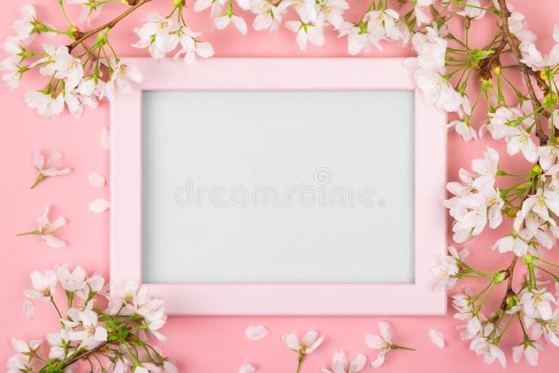 Quadro cor-de-rosa da primavera com espaço vazio e flor de cerejeira foto de stock
