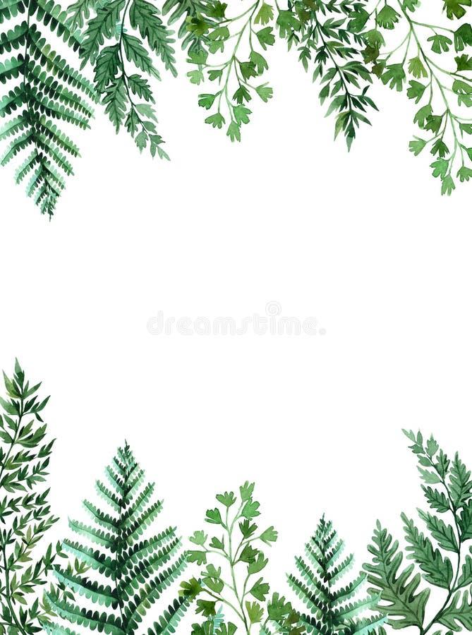 Quadro da aquarela com folhas tropicais e folhas dos houseplants greenery succulent Ilustra??o floral do projeto element Aperfei? ilustração royalty free