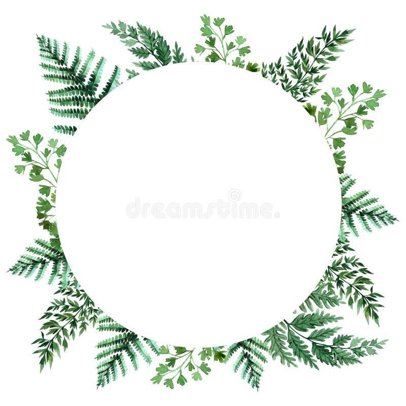 Quadro da aquarela com folhas tropicais e folhas dos houseplants greenery succulent Ilustra??o floral do projeto element Aperfei? ilustração do vetor