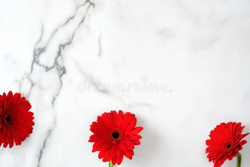 quadro da beira da flor Cabeça de flores vermelha da margarida dispersada no fundo de mármore Disposi??o criativa, estilo colocad foto de stock royalty free