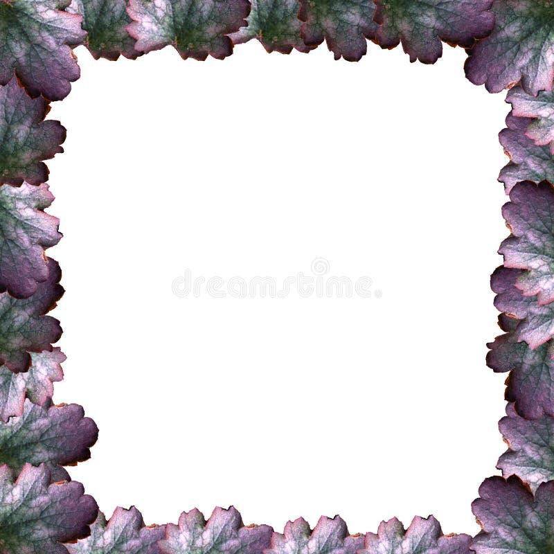 Quadro da flor foto de stock royalty free