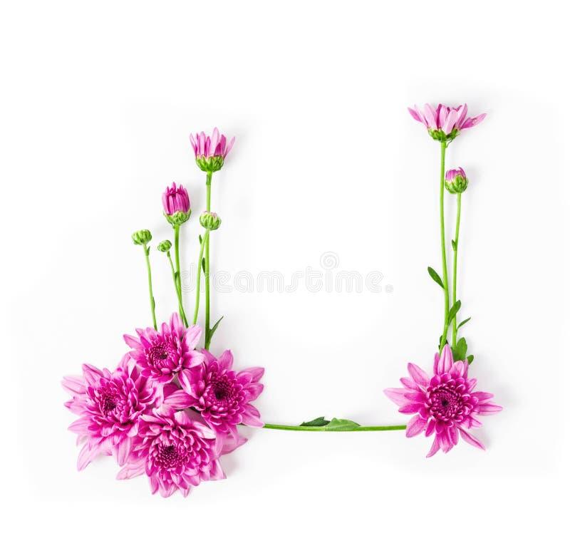 Quadro da flor cor-de-rosa do crisântemo imagem de stock