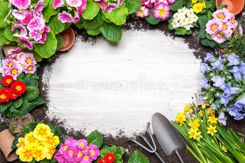 Quadro da flor da mola e das ferramentas de jardinagem imagem de stock royalty free