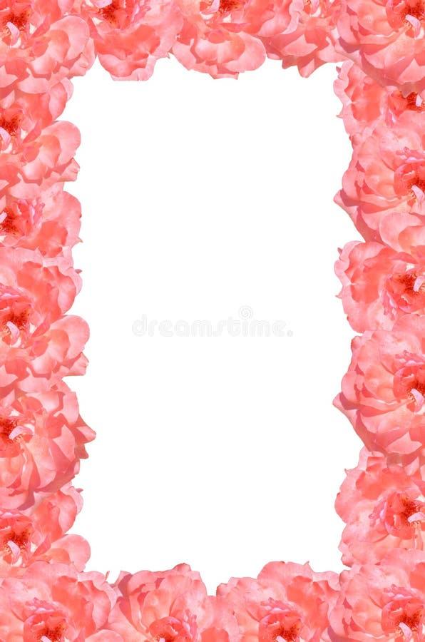 Quadro da flor da rosa do rosa fotos de stock royalty free
