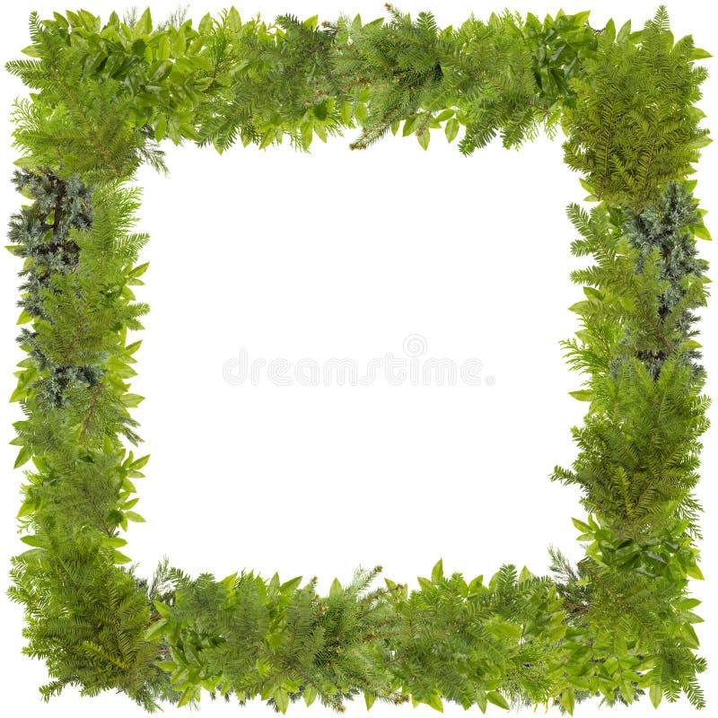 Quadro da foto da árvore de abeto do Xmas imagens de stock royalty free