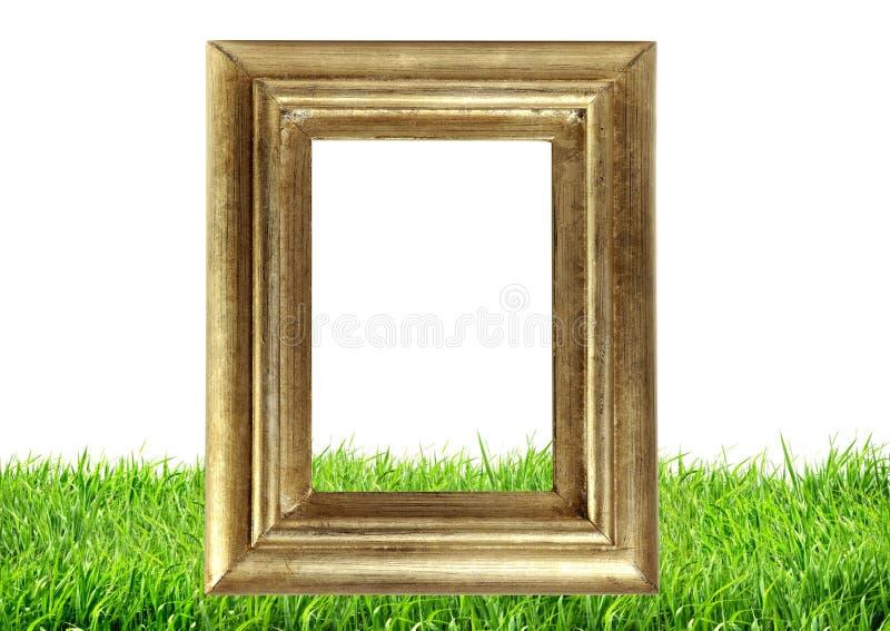 Quadro da foto na natureza da grama verde fotografia de stock
