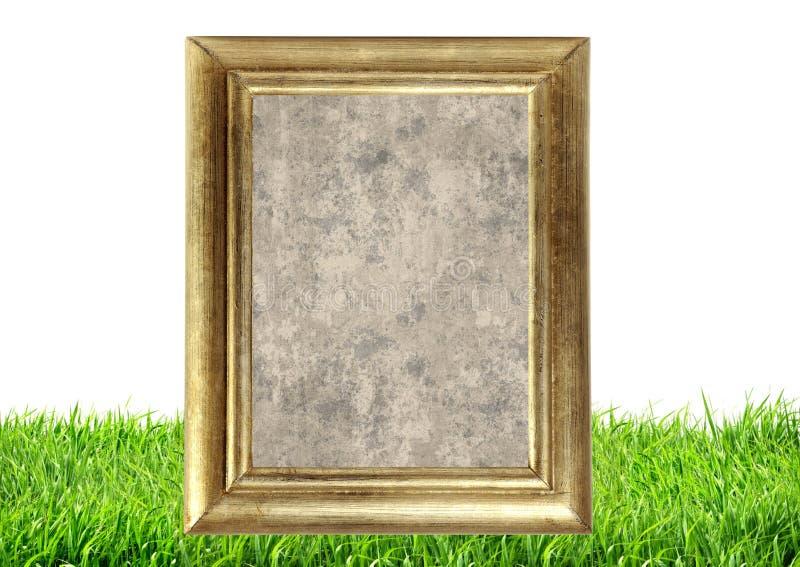 Quadro da foto no fundo da natureza da grama verde imagens de stock