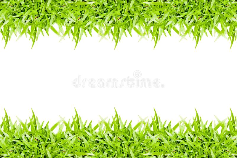 quadro da grama verde isolado no fundo branco foto de stock royalty free