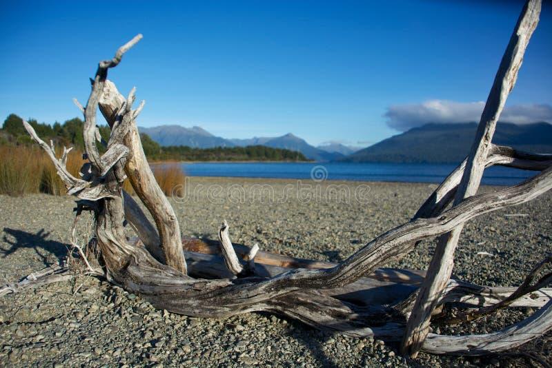 Quadro da madeira lançada à costa foto de stock