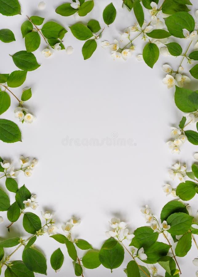 Quadro das flores brancas e das folhas verdes no fundo branco, vista superior Cart?o da mola com espa?o da c?pia para o texto foto de stock royalty free