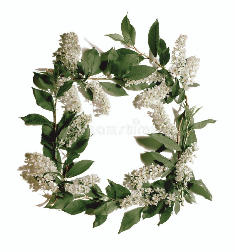 Quadro das flores e folhas brancas foto de stock royalty free