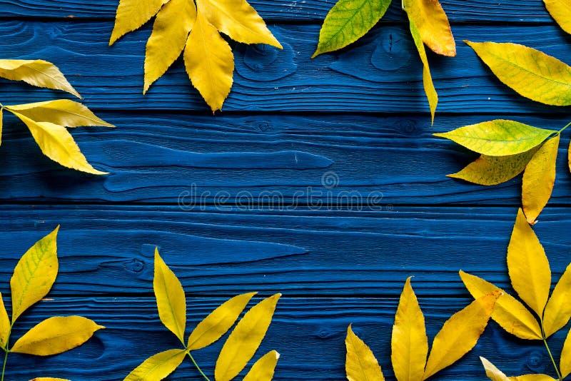 Quadro das folhas de outono Folhas amarelas e verdes nas beiras no espaço de madeira azul da cópia da opinião superior do fundo fotografia de stock royalty free