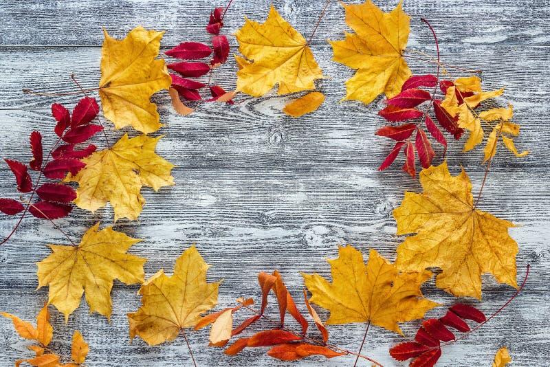 Quadro das folhas de outono caídas nas placas de madeira cinzentas foto de stock