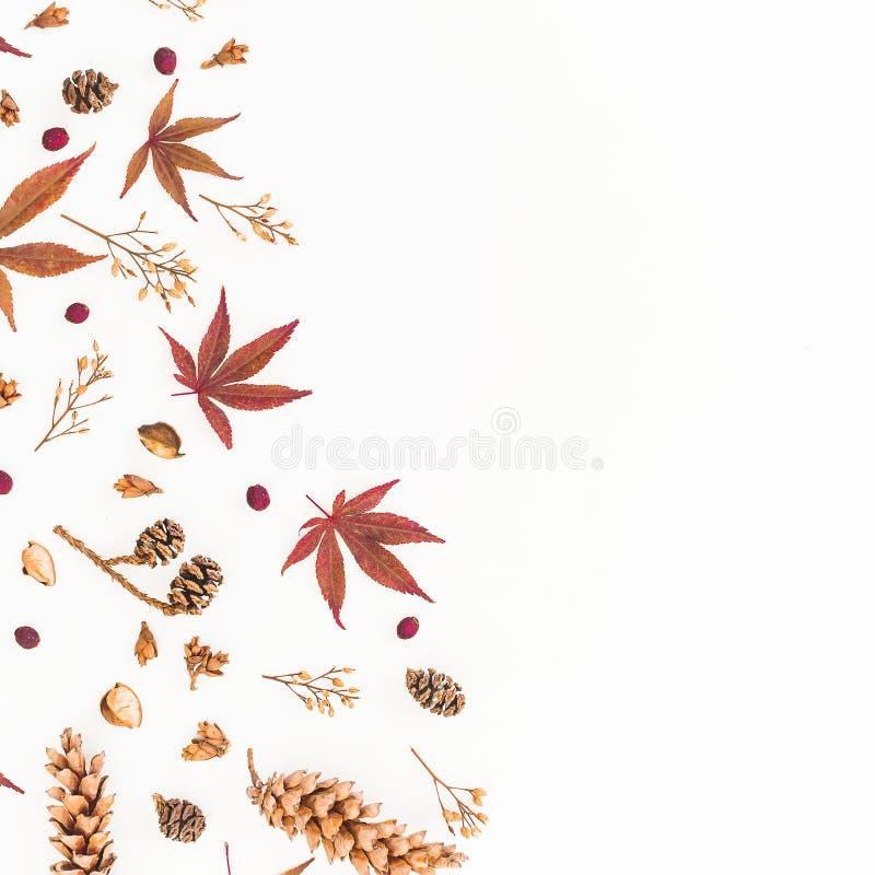 Quadro das folhas de outono, de flores secadas e de cones do pinho isolados no fundo branco Configuração lisa, vista superior, es fotos de stock royalty free