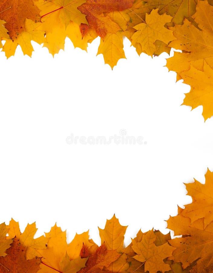 Quadro das folhas de outono em um fundo branco imagem de stock royalty free