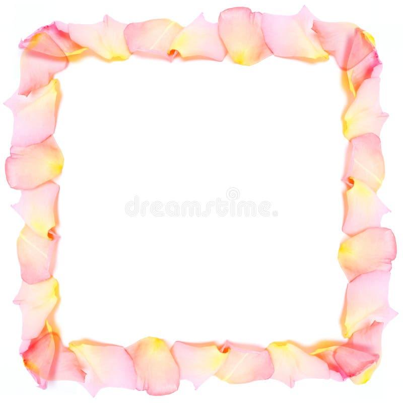 Quadro das pétalas cor-de-rosa foto de stock