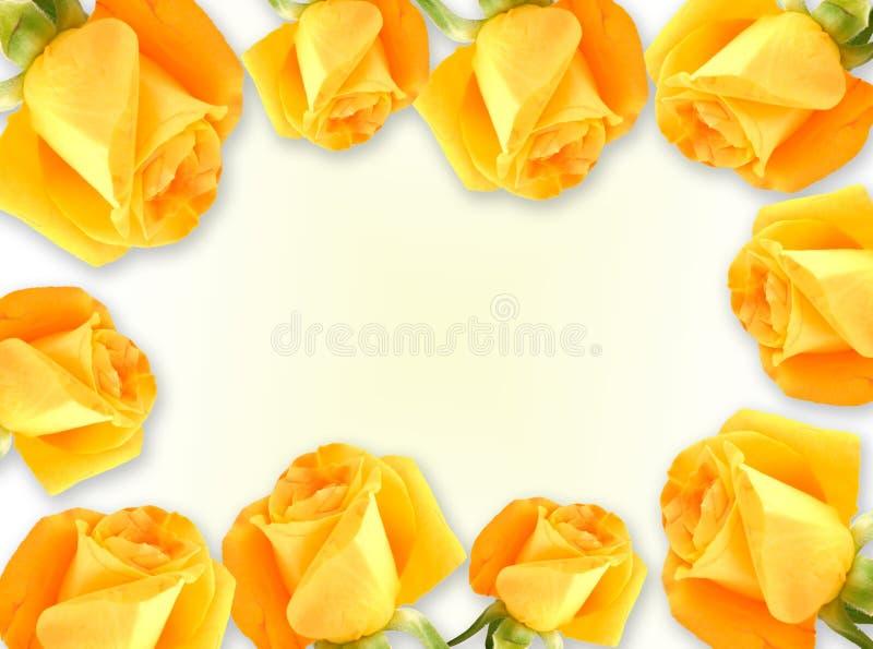 Quadro das rosas fotografia de stock royalty free