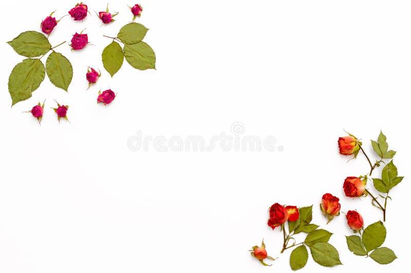 Quadro das rosas das flores em um fundo branco Teste padrão de flor para cartões para o aniversário, casamento, dia do ` s da mãe foto de stock royalty free