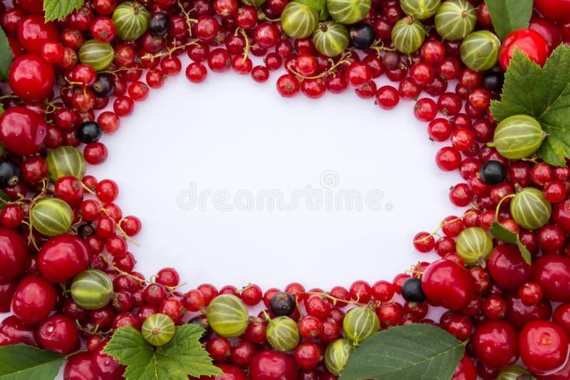 Quadro de bagas frescas (cerejas, corintos vermelhos e pretos, groselhas) com folhas verdes imagens de stock