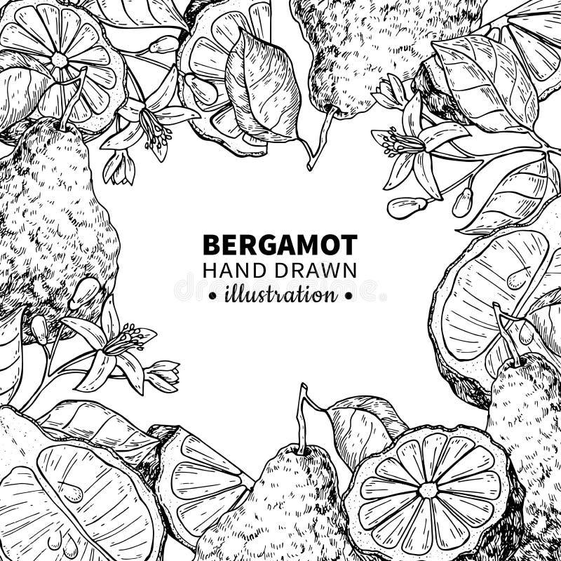 Quadro de desenho do vetor da bergamota Molde isolado do vintage do cit ilustração do vetor