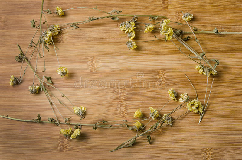 Quadro de flores murchos fotografia de stock