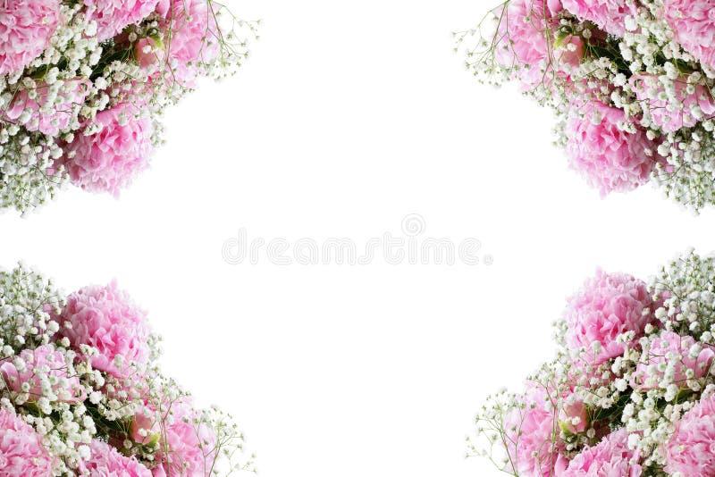 Quadro de florescência cor-de-rosa das peônias e das flores da respiração dos bebês contra um fundo branco fotos de stock royalty free