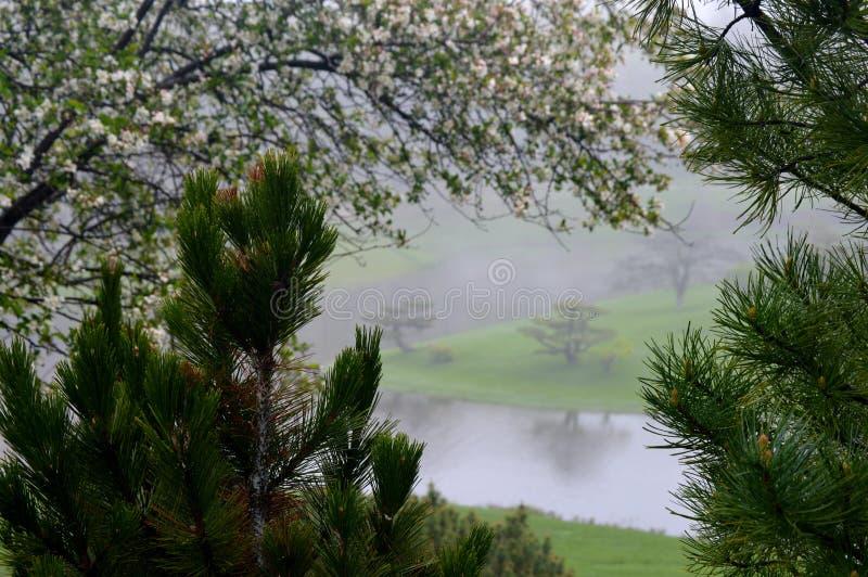 Quadro de jardim japonês nevoento imagens de stock